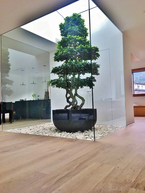 Plant and planter - Microcarpa Bonsai in Atrium Lucerne - Switzerland