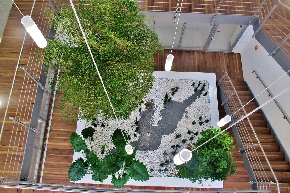 Solitaire tree and plants in the atrium plan and buy online - Norway an Europe