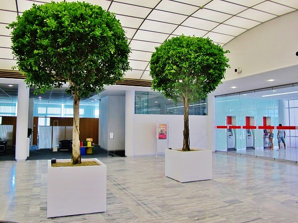Big tropical tree interior lobby of bank house - Norway, Finland, Sweden, Denmark - Europe buy online
