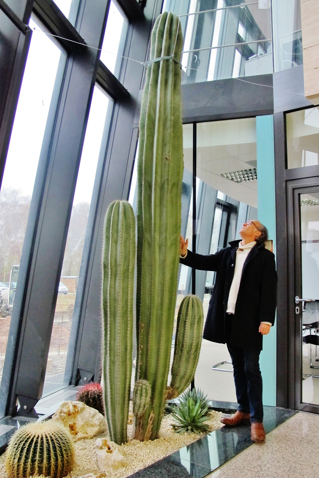 Big tropical cacti interior lobby and stairway - Norway, Finland, Sweden, Denmark - Europe buy online