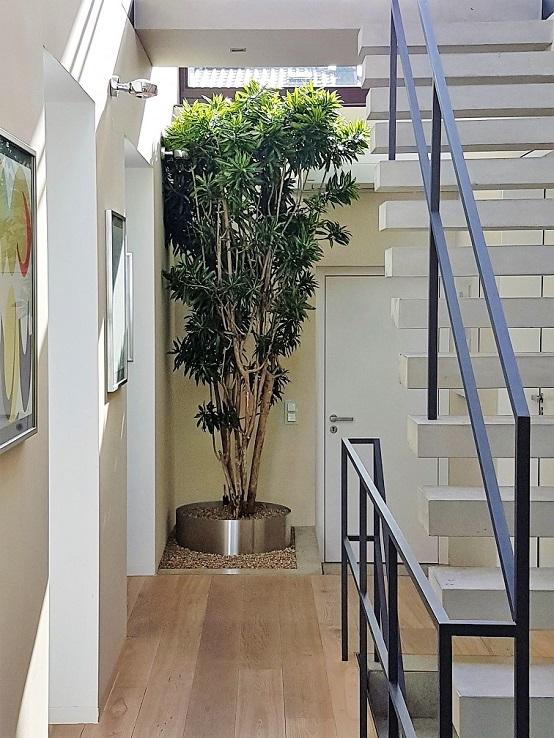 Kleiner Baum Pflanze In Wohnraum Wohnung Online Kaufen