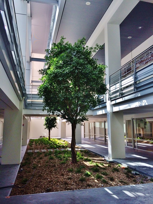 Big tropical tree indoor buy France - Europe - example University Lyon