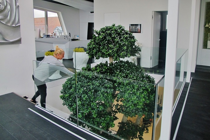 big ficus microcarpa tree in the atrium buy online
