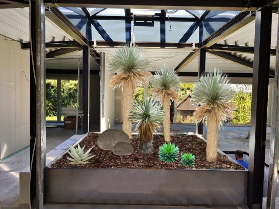 Photomontage atrium with mexican yuccas rostrata
