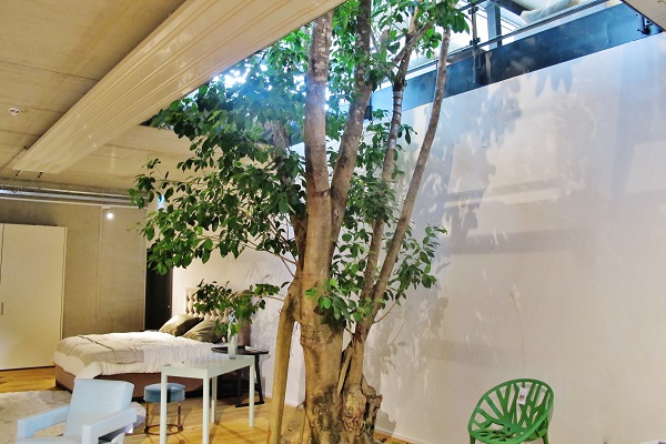 Big tropical tree interior lobby and shopping center - Norway, Finland, Sweden, Denmark - Europe buy online