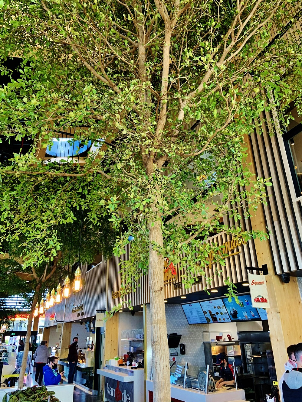 Irland Shopping Center Bucida Baum im Raum