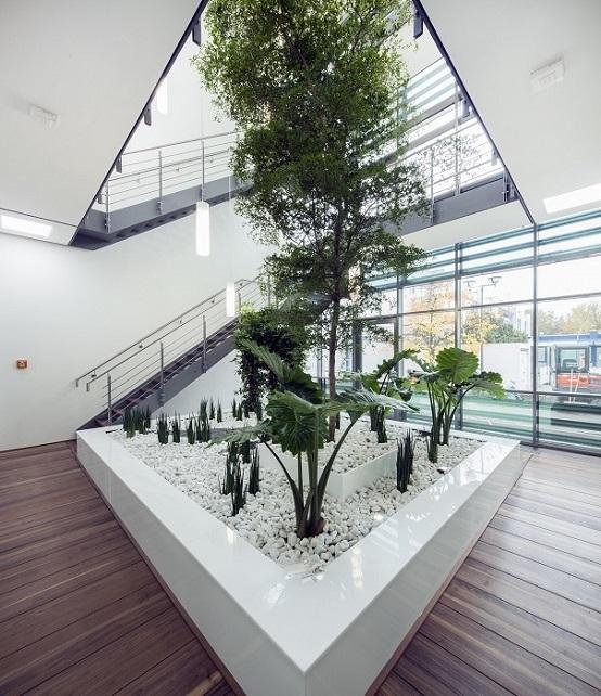 Innenraumbegrunung Bayern Pflanzen Baum Im Raum Kaufen