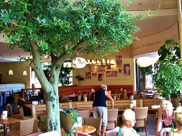 Olive tree in a Coffee-house