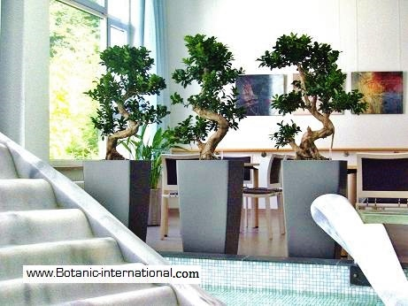 Interior and Indoor trees and plants for hospital, healthcare and clinic norway, sweden, finland, denmark, louxembourg, france, europe