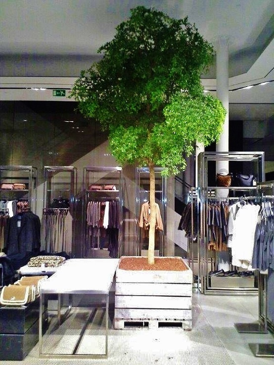 Plan and buy plants for fashion house, boutique and clothing store online