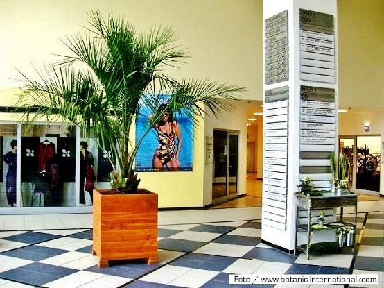 innenraumbegruenung pflanzen modehaus boutique bekleidungshaus kaufen. Black Bedroom Furniture Sets. Home Design Ideas