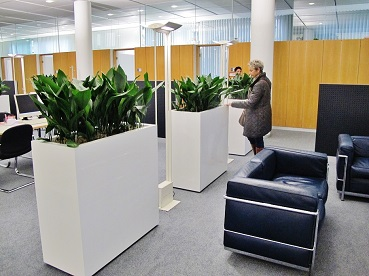 Plant aspidistra in room divider - Buy online