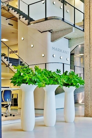 Plant vase Chapeau planted with Aralia online buying