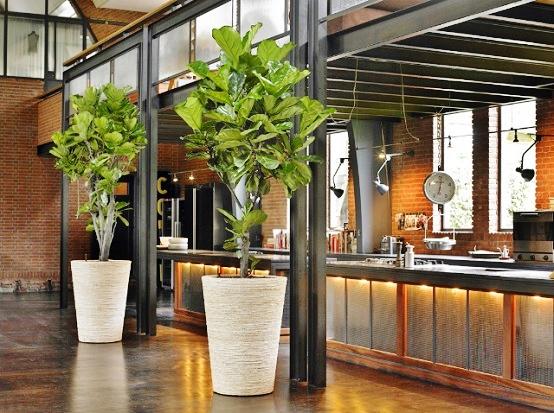 raumpflanze mit pflanzgef fertig gepflanzt liefern und kaufen. Black Bedroom Furniture Sets. Home Design Ideas