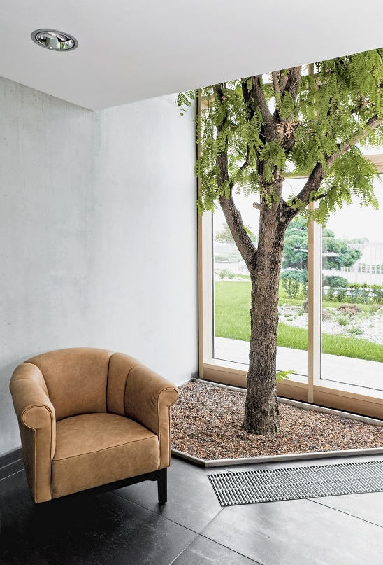 A rare tamarind tree in the foyer. buy online