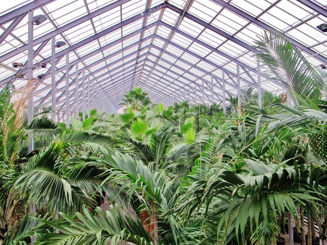 gro e exotische tropenpflanzen und b ume 2 bis 12m aller art kaufen. Black Bedroom Furniture Sets. Home Design Ideas