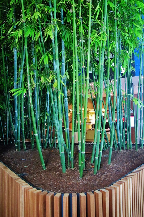 Buy bamboo tropical tropical greenery buy online