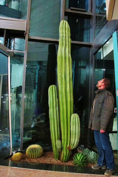 big_cacti_tree_plant_buy_indoorlandscaping