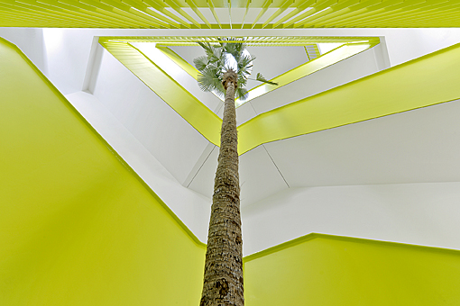 big_palm_indoorlandscaping_buy_big_plant