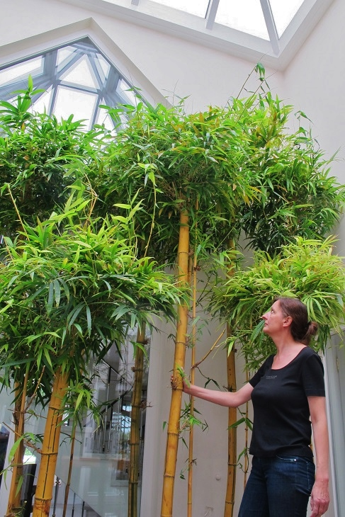Tropical bamboo forest in the private atrium buy online