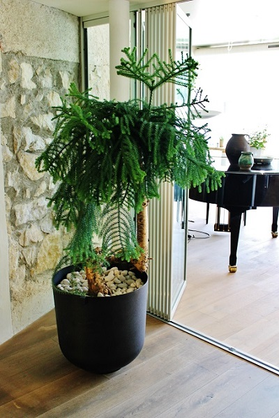 Plants, trees and planters indoor in Hotel, Lobby, Gastronomy,  Denmark and Europe buy online