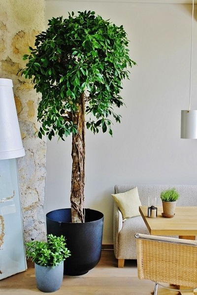 Plants, trees and planters indoor in Hotel, Lobby, Gastronomy, Finland and Europe buy online