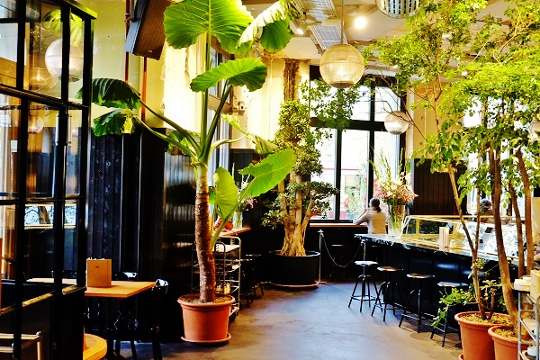 Plants, trees and planters indoor in Hotel, Lobby, Gastronomy, Switzerland and Europe buy online