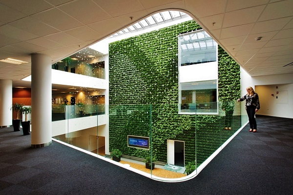 Large rooms with green wall - Greenwall buy online