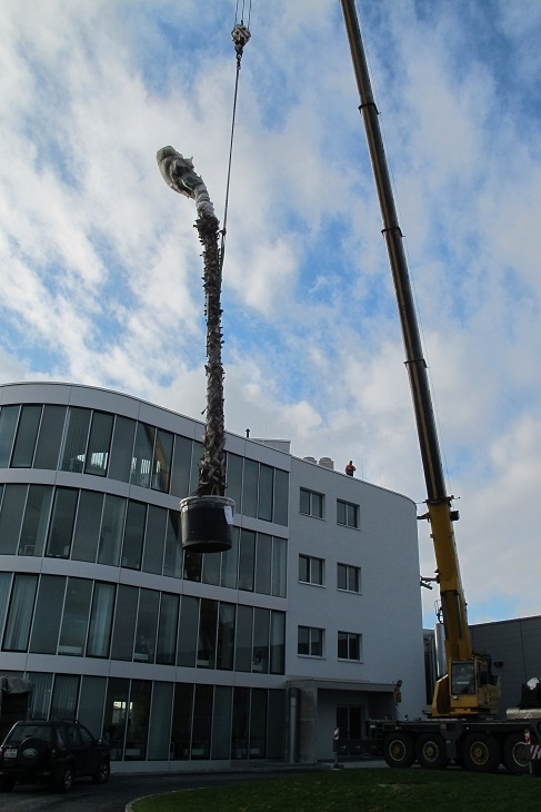 Washingtonia Palme am Autokran - Innenraumbegrnung