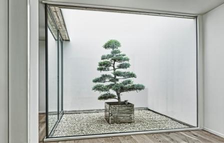 Glass atrium Switzerland Ilex crenata