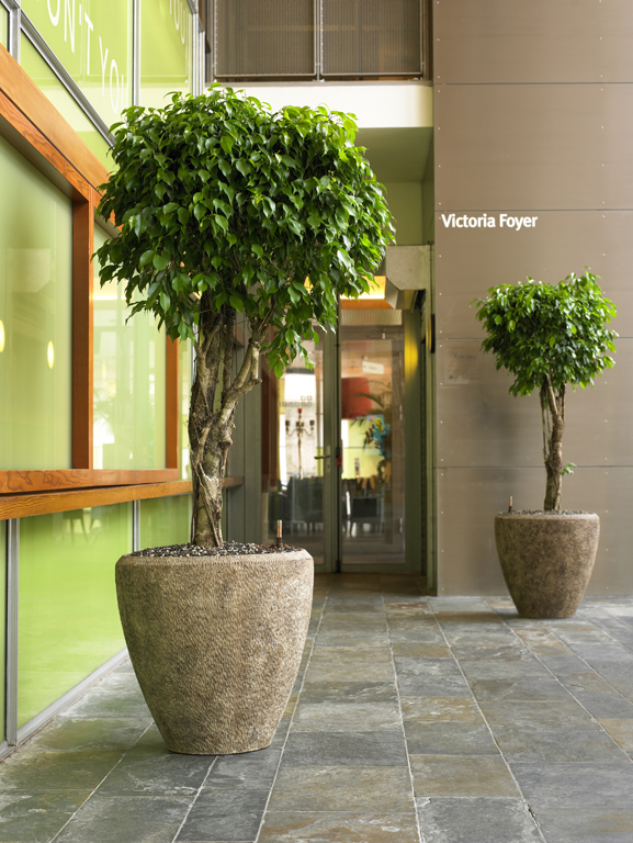 Plants, trees and planters indoor in Hotel, Lobby, Gastronomy, Sweden and Europe buy online